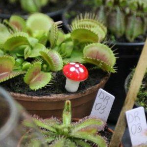 Толстянки, росянки и мухоловки: в Виннице презентовали выставку хищных и экзотических растений. Фото